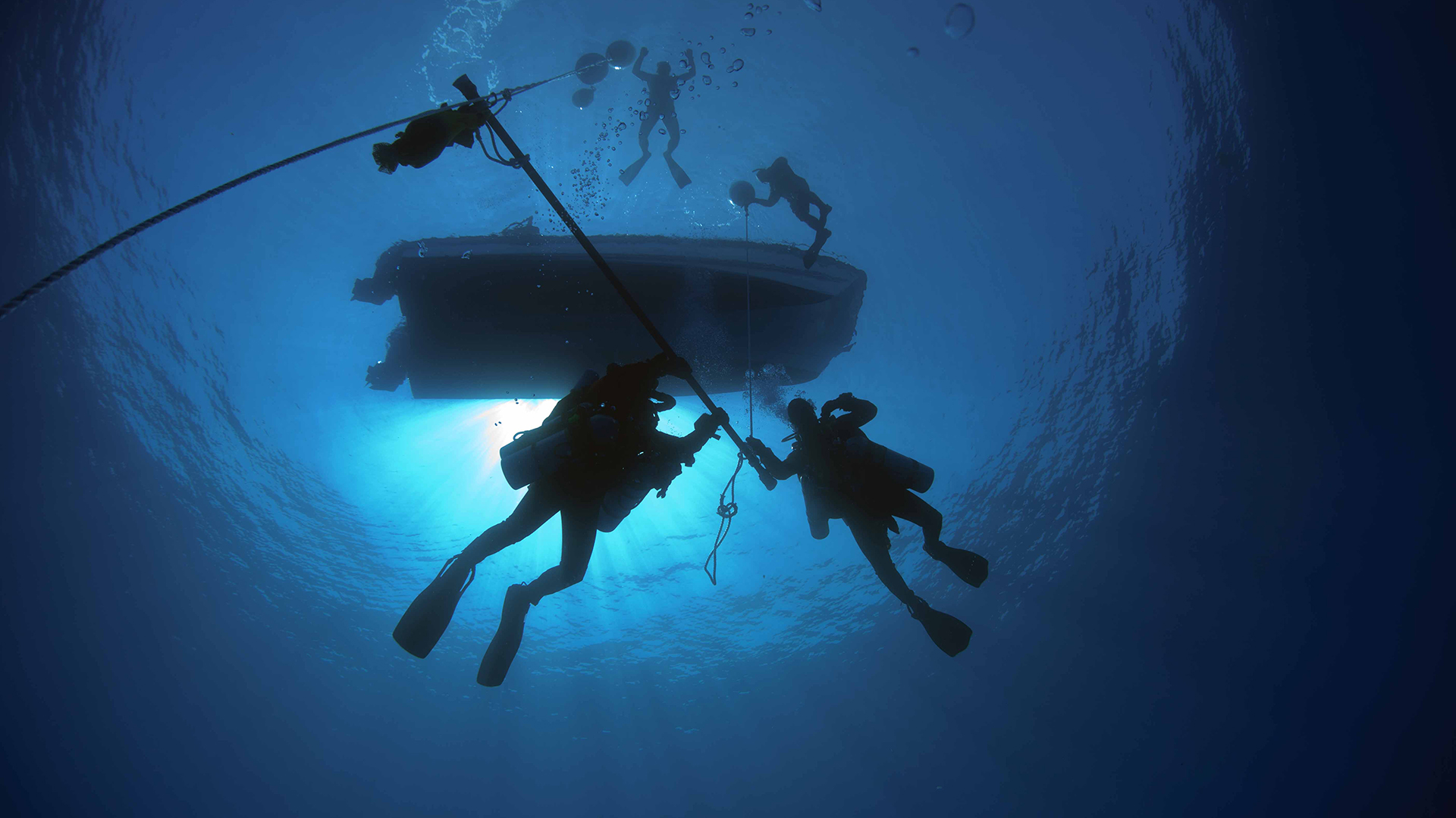 Underwater diving   Wikipedia We conduct daily census of biodiversity sightings of sharks  fishes and  other ocean fauna on Aliwal Shoal  oceans research